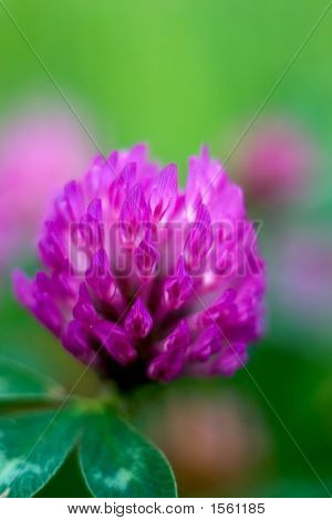 Abstract2-Redclover