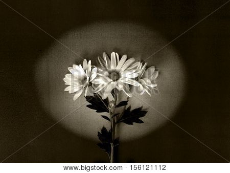White flowers on dark background - condolence card