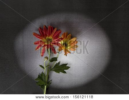 Red flowers on dark background - condolence card