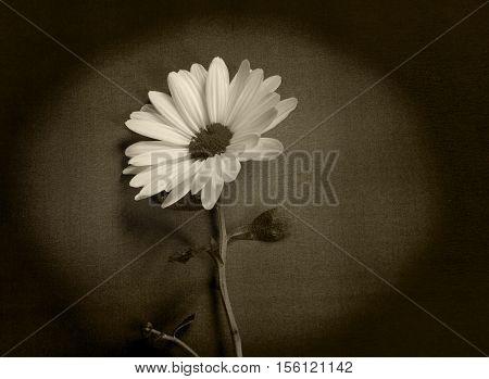 White flower on dark background - condolence card