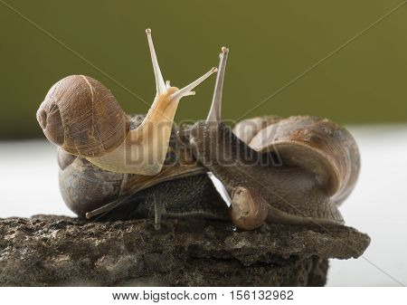 Land snails family disscussing over important topic