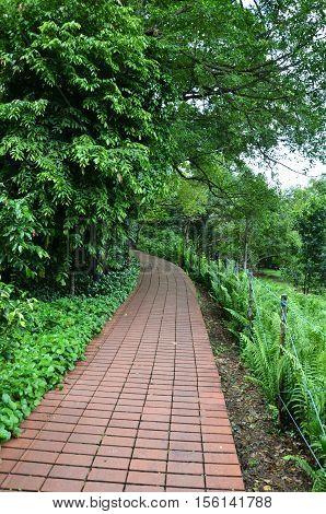 Greenary around Red brick path in Singapore Botanic Garden