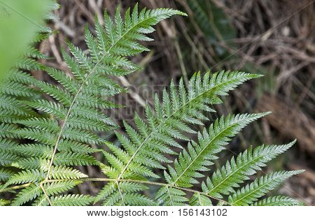 Fresh Green Ferns Background