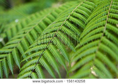 Fresh green New Zealand fern nature backgrounds