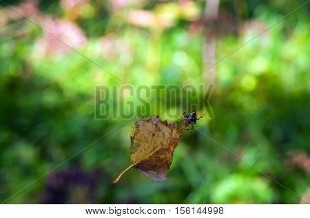 leaf and spider dangling in the air