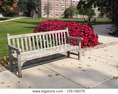 wood garden bench by a concrete patio and beautiful red flowers