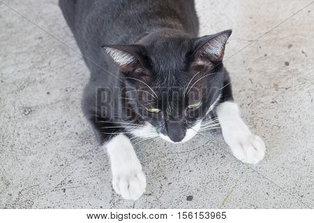 Black and white cat relaxing stock photo