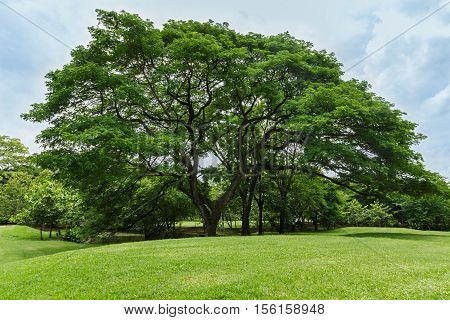 trees and green lawn in the garden