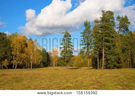 Slanted field and suburb of the wood in the October sunny day. Indian summer in Russia