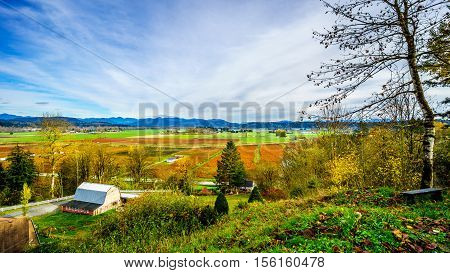 Fall colors of the Blueberry Fields in Glen Valley in the Fraser Valley of British Columbia, Canada