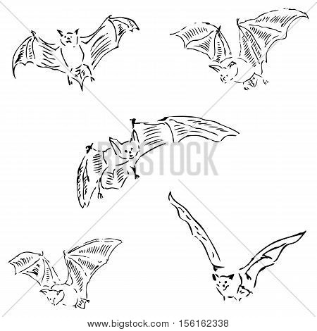 Bats in different positions. Pencil sketch by hand. Vector image