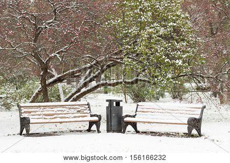 Two bences covered with snow in winter park with green tree