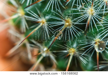 Beautiful teardrop macro over light tone of cactus flower,Beautiful cactus, Image has shallow depth of field