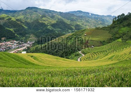 Rice fields on terraced of Mu Cang Chai YenBai Vietnam. Rice fields prepare the harvest at Northwest Vietnam. Mu Chang Chai is near Sapa.