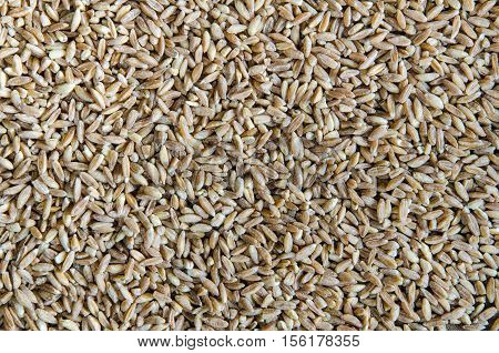 Spelt wheat cereal background. Healthy lifestyle concept.
