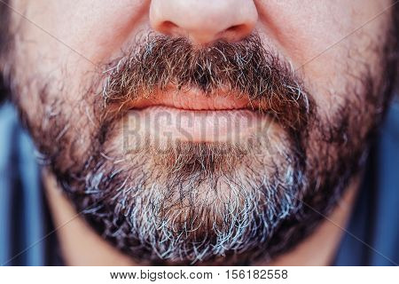 Greying beard and moustache with grey hair over lips on unshaved masculinity face of mature middle-aged man