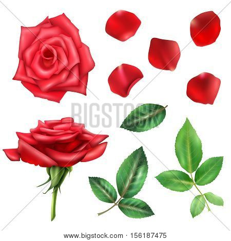 Beautiful blooming red rose flower petals and leaves realistic set isolated on white background vector illustration