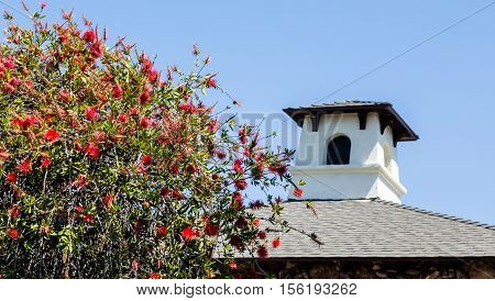 Pink Mimosa by Roof under blue sky
