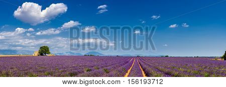 Summer in Valensole with lavender fields, stone house and heart-shaped cloud (panoramic view). Summer in Alpes de Hautes Provence, Southern French Alps, France