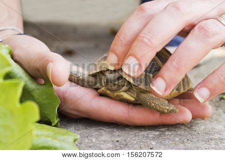 Woman Holds A Turtle
