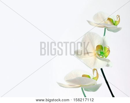 orchid bouquet on white background