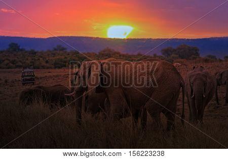 Group of African bush elephants (Loxodonta africana) crossing at sunset Kenya