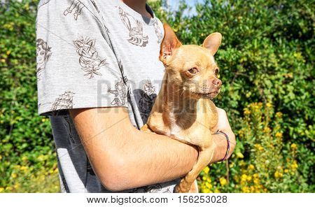 Young man holding his dog pet in the arms - Focus on dog's face