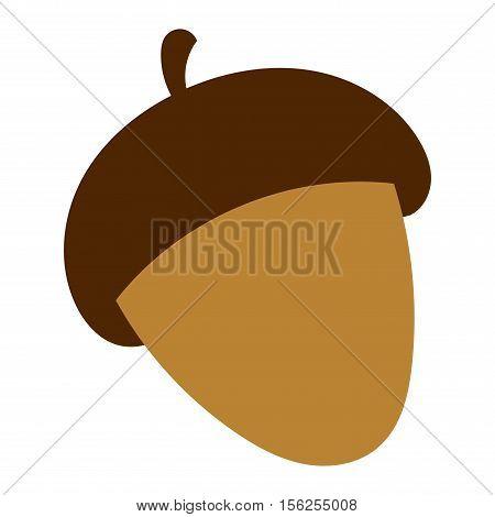 Dried acorns flat vector illustration. Acorns oak isolated on white. Nature plant acorns autumn decoration.
