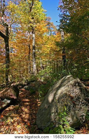 a trail covered in fallen autumn leaves meanders between trees and boulders