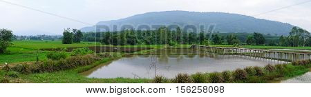 Panorama lush green rice fields of the countryside Thailand