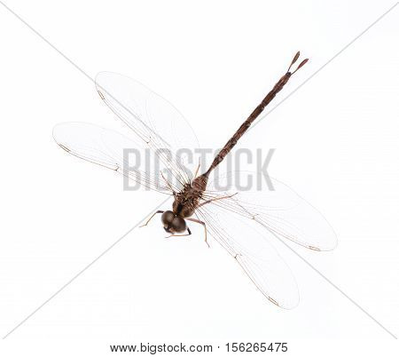 beautiful Dragonfly isolated on a white background.