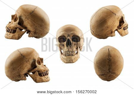 Collection set of human skull (have clipping path), Human skull isolated on white background