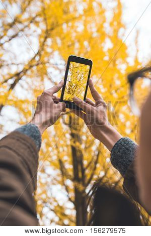 Male tourist holding smartphone taking photo of ginkgo leaf in autumn urban park.