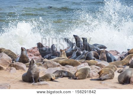 The Seal Colony At Cape Cross, On The Atlantic Coast Of Namibia, Africa. View On The Shoreline And T