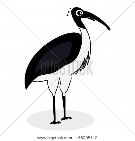 Ibis black white bird. Ibis bird and white ibis vector illustration