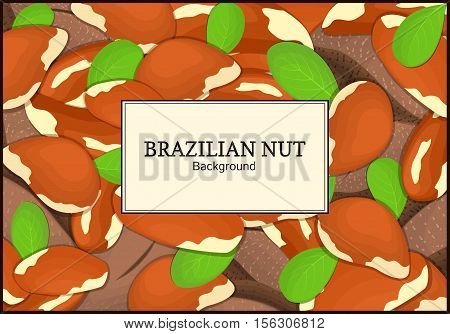 The rectangular frame on brazilianut background. Vector card illustration. Nuts frame, brazilnut fruit in the shell, whole, shelled, leaves, appetizing looking for packaging design of healthy food