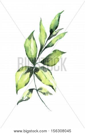 Watercolor leaf on white background design element. It can be used for card, postcard, cover, invitation, birthday card.