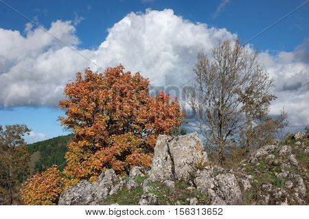 autumnal view oak and encrusted rock formation against white cloud in Nebrodi Park, Sicily