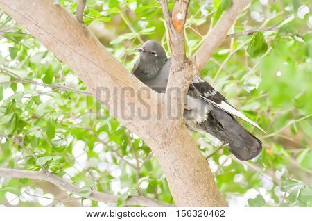 a pigeon or dove on the tree
