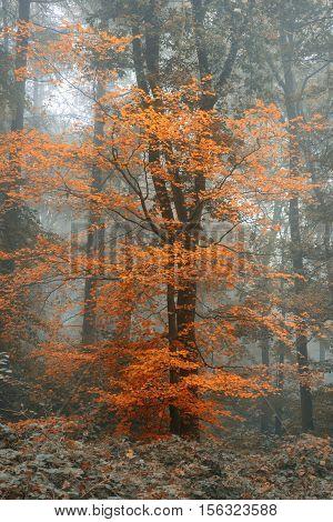 Beautiful Surreal Alternate Color Fantasy Autumn Fall Forest Landscape Conceptual Image