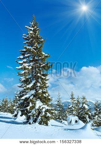Sunshine Above Winter Mountain Fir Forest