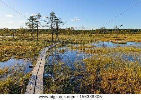 Bog landscape with boardwalk, nice summer day.