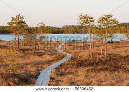 Boardwalk in the bog - Kakerdaja bog in Estonia.
