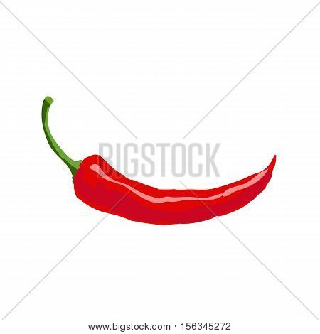 Hand drawn red hot chili pepper, svector illustration isolated on white background. Chili pepper, spice, traditional ingredient of Mexican cuisine
