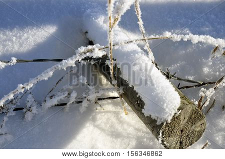 An image of an old barbwire fence laying in the snow.