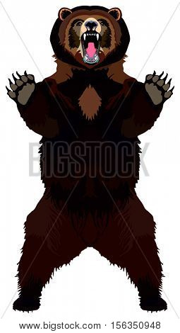 Vector Grizzly Bear brown lives in north america forest in attack standing position opened mouth paw with sharp claw angry ready to kill other animal isolated background ravenous predatory wild