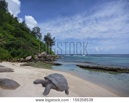 Tropical beach and gigantic turtle. Sea bay scenery. Aldabra giant tortoise. Scenic landscape with sandy beach sea Praslin island Seychelles Indian Ocean. Popular tourist destination of Africa