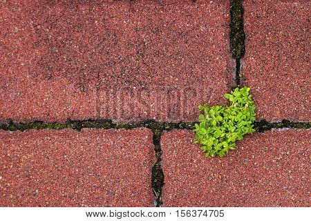 Green plant growing through the gap in pavement depicting a concept of vitality.