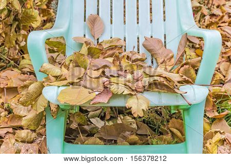 Fallen leaves and walnuts on a forgotten sun lounger in the autumn garden close up. Selective focus