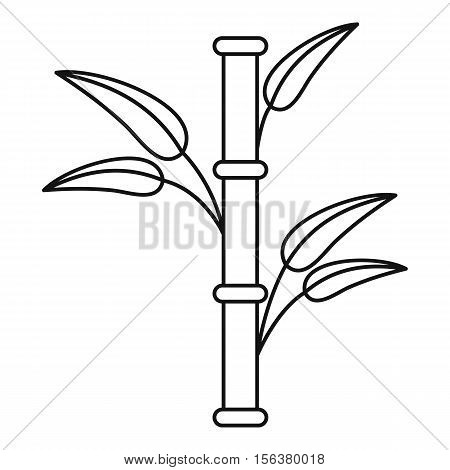 Bamboo icon. Outline illustration of bamboo vector icon for web design